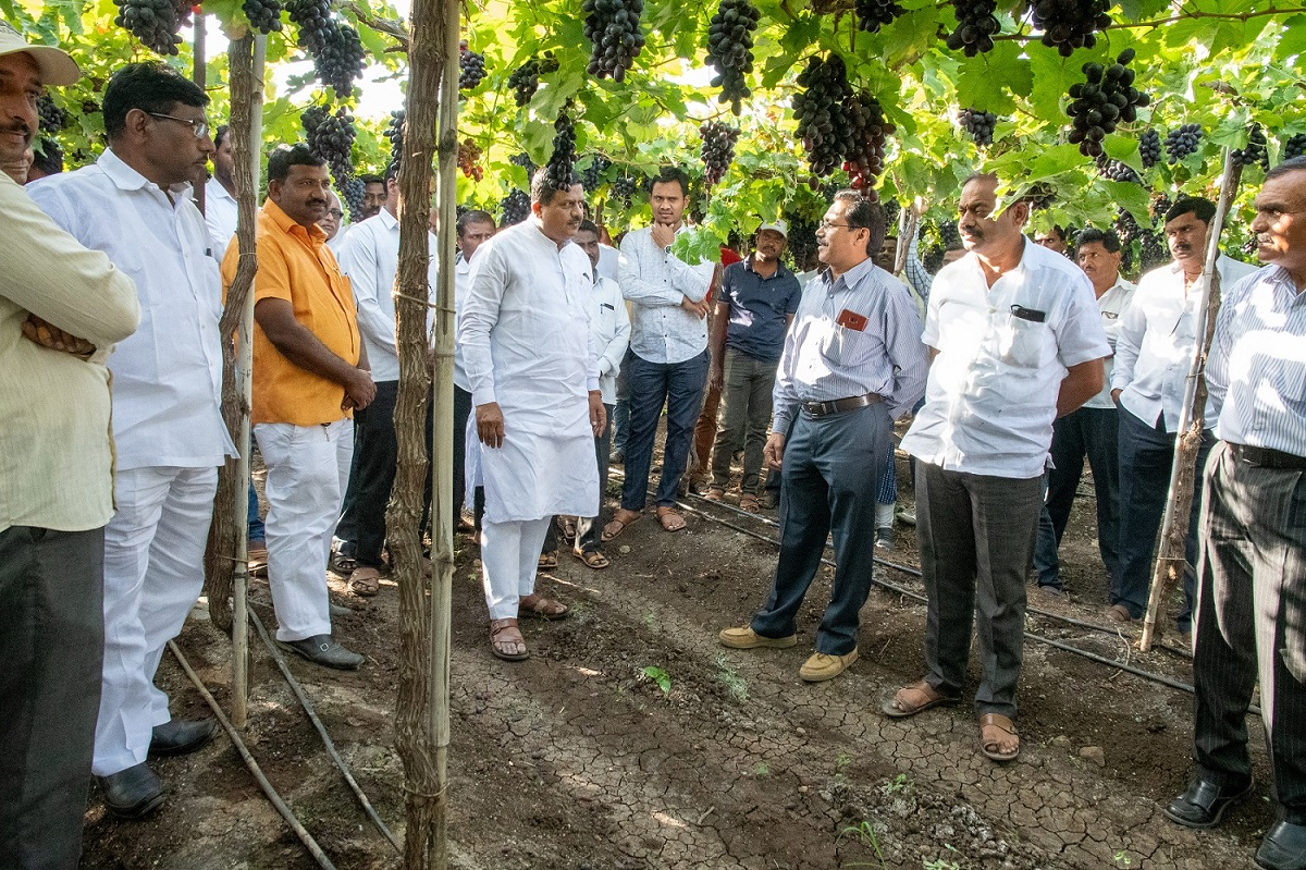 grape day Indapur 2020